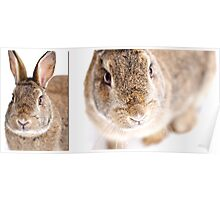 Snowy Bunny Diptych Poster