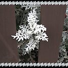Dusty Miller - A Pretty White Bush by BlueMoonRose