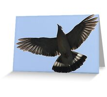 The Wood Pigeon Greeting Card