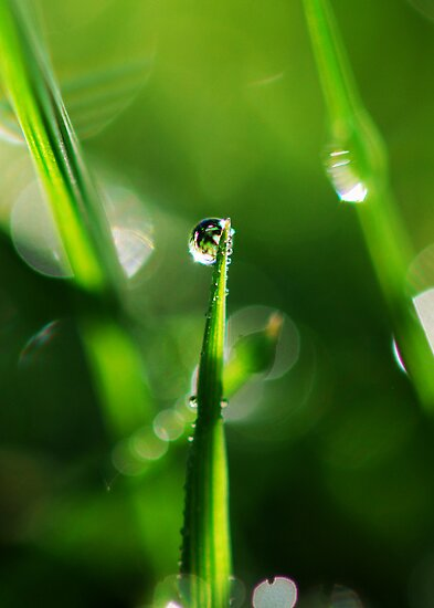 The Grass is Always Greener in Macro Land by BobbiFox