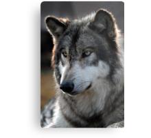 back light wolf Metal Print