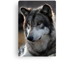 back light wolf Canvas Print