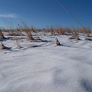 Snow Dunes by Brian Gaynor