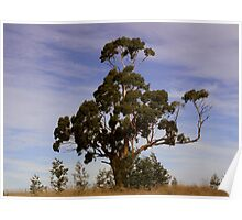 extended branch Poster