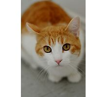 Softy Cat Photographic Print