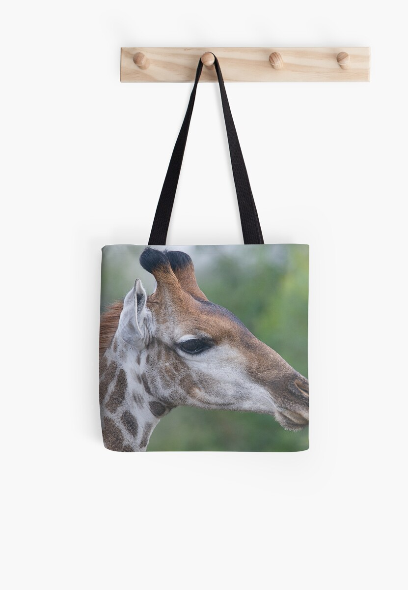 Young Male Giraffe by Michael  Moss