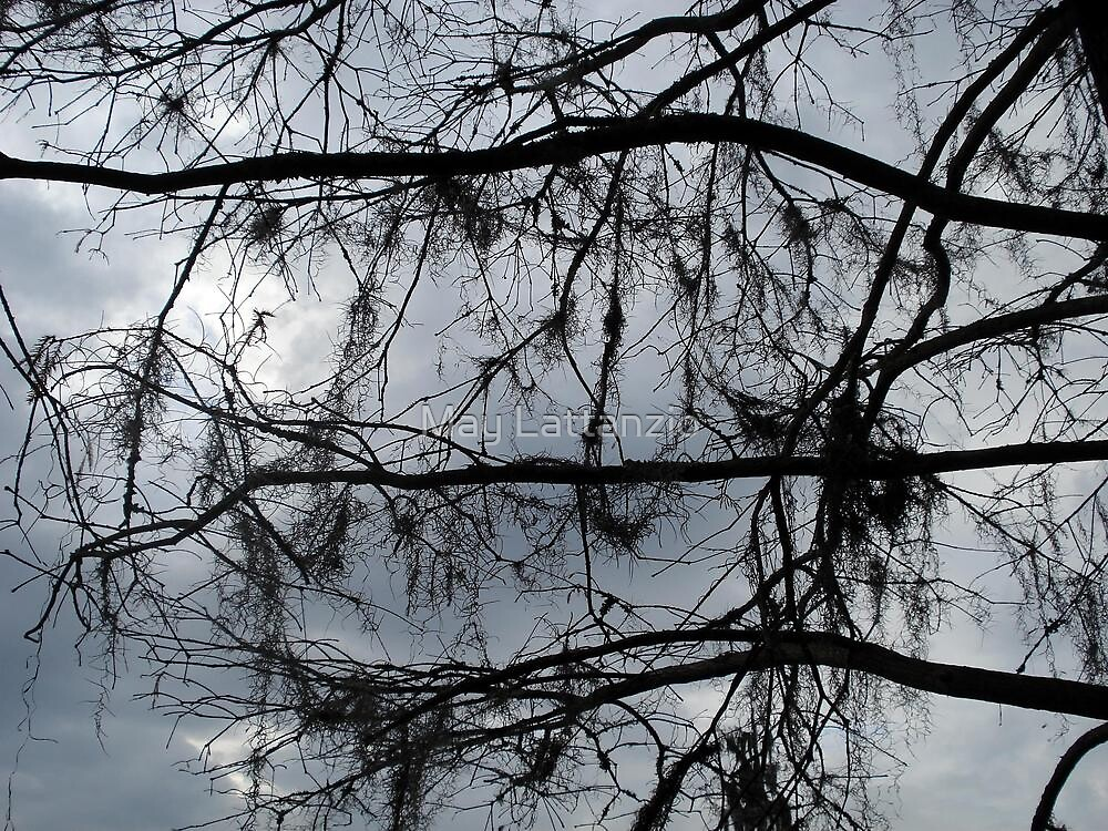 Bare Branches - December in Bayou George, FL by May Lattanzio