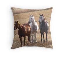 Equine Curiosity Times Three Throw Pillow