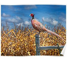 Image of a Ringneck Pheasant Poster