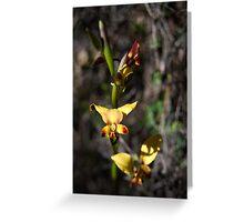 Donkey Orchid, Western Australia Greeting Card