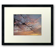 FEBRUARY:  GUM TREE BRANCH AT SUNSET Framed Print