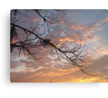 FEBRUARY:  GUM TREE BRANCH AT SUNSET Canvas Print