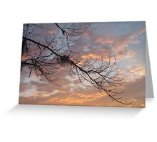 FEBRUARY:  GUM TREE BRANCH AT SUNSET Greeting Card