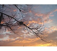 FEBRUARY:  GUM TREE BRANCH AT SUNSET Photographic Print