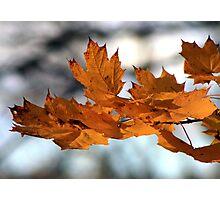 Fabulous Autumn Photographic Print