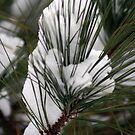 Pine Needles in the Snow by Sherry Durkin
