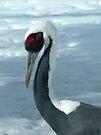 Winter Crane by Veronica Schultz