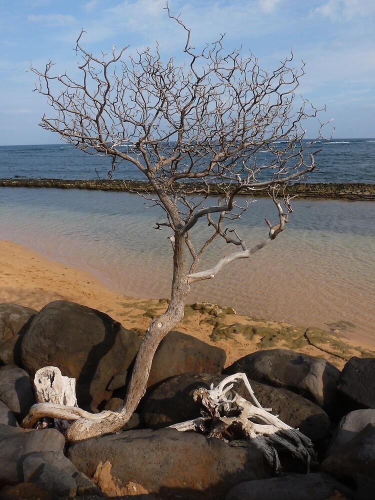 Tree at Baby Beach by Barbara Morrison