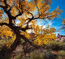 Fall Comes to Arches by Clayhaus