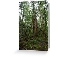 Rainforest 13 Greeting Card