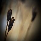 Pods  by Annie Lemay  Photography
