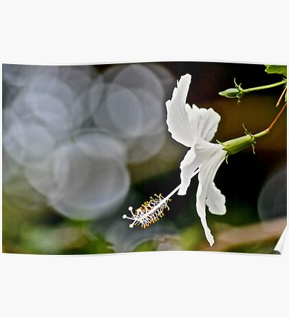 Her Bokeh focus in the garden...: On Featured: A-meaningful-moment Group Poster