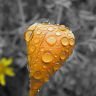 Within A Drop of Rain by FFRPhoto