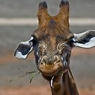 one grumpy giraffe by paul erwin