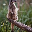 Out on a limb by Lisa  Kenny