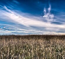 Surfin the Cornfield by Jonathan Stacey
