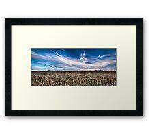 Surfin the Cornfield Framed Print