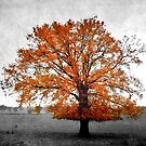 A Tree in Autumn by rosedew