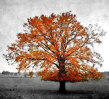 A Tree in Autumn by rosedew