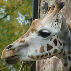Niamh the Giraffe by AnnDixon