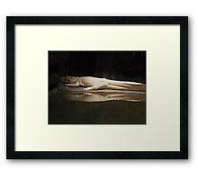 White Alligator  Framed Print
