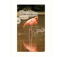 Honolulu Zoo: Pink Flemingo Reflection Art Print
