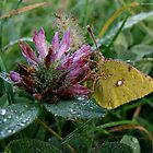 Frozen butterfly by VPopovic