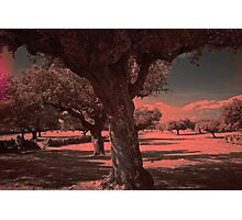 Countryside on I.R. Photographic Print