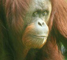 Honolulu Zoo: Kristy by Kezzarama