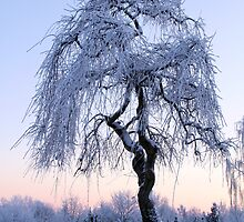 Winter Tree at the Cemetery, Denmark by Per Bjarne Pedersen