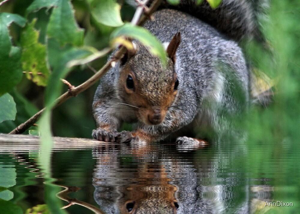 Squirrel Reflection by AnnDixon