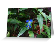 Scurvy weed, Commelina cyanea Greeting Card