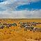 (Habitats & Landscapes Category) - Grassland