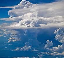 Mushrooms in the Sky by Krys Bailey