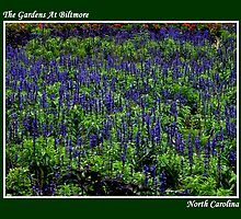 The Gardens At Bilmore ~ Part Three by artisandelimage