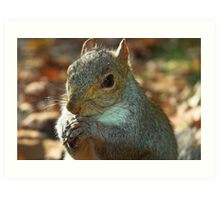 Squirrel posing with nut Art Print