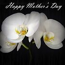 Phalaenopsis Orchid - Happy Mother's Day by Jennifer Sumpton