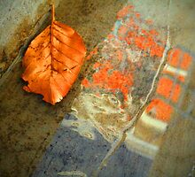The Leaf and the Reflection by Tara  Turner