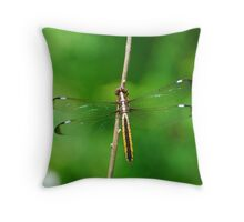 Spangled Skimmer Throw Pillow