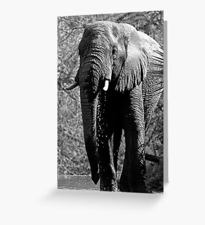 Elephant Spa Greeting Card